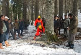 ağaç katliamı