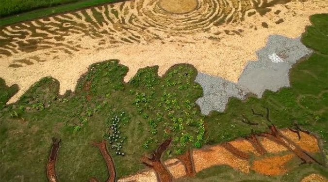 artist-cultivates-1.2-acre-field-into-crop-art-tribute-to-van-gogh-2